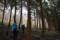 植林帯を抜ける