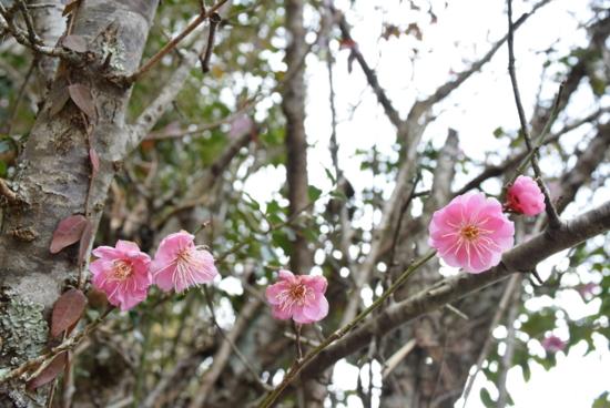 f:id:kurokoshusaru:20170302204659j:image