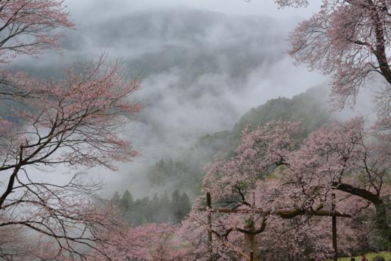 f:id:kurokoshusaru:20170412182403j:image
