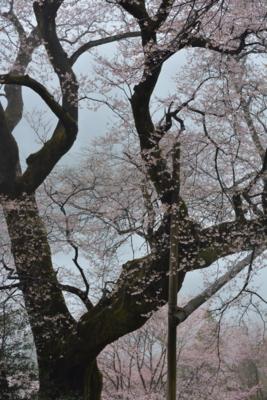 f:id:kurokoshusaru:20170412183049j:image