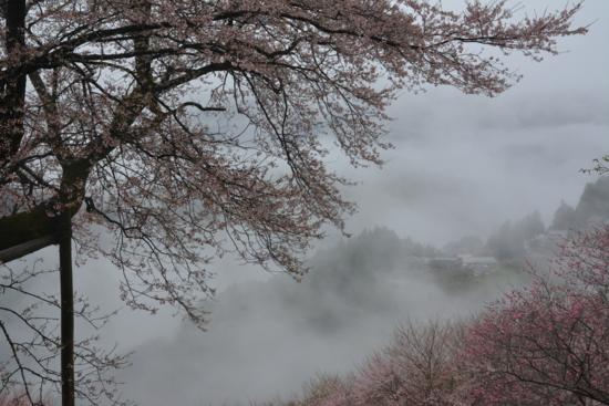 f:id:kurokoshusaru:20170412183930j:image
