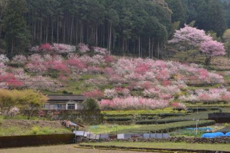 f:id:kurokoshusaru:20170416173347j:image