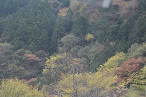 f:id:kurokoshusaru:20170424191821j:image
