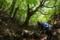 橅の森へ (2)