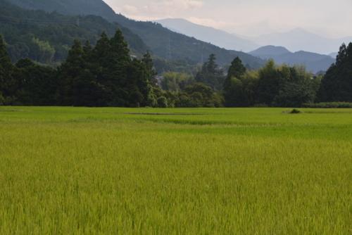 f:id:kurokoshusaru:20170724192659j:image