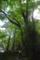 長笹谷の大桂