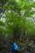カンカケの大桂