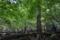カンガケの森