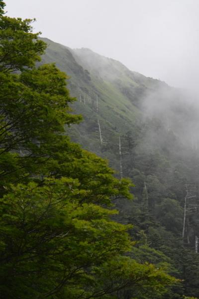 f:id:kurokoshusaru:20170809162210j:image