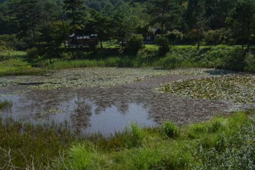 f:id:kurokoshusaru:20170828175846j:image