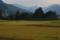 韮生の田圃