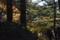 広葉樹林へ