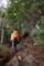 馬酔木の森