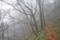 霧の中 (3)