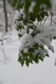 雪積もる (2)
