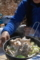 ブナシメジと青梗菜