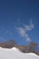 山毛欅と雲