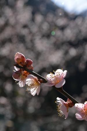 f:id:kurokoshusaru:20180322192726j:image