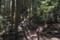 鷲尾山の森