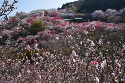 f:id:kurokoshusaru:20180403185525j:image