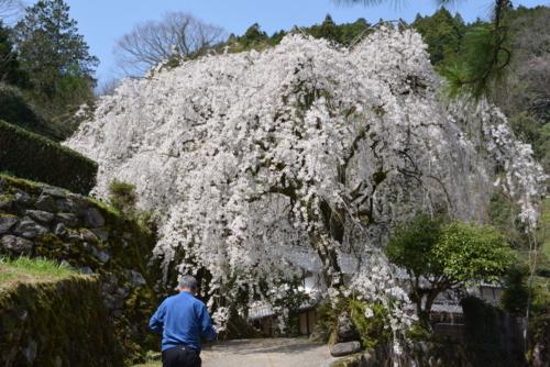 f:id:kurokoshusaru:20180404190125j:image