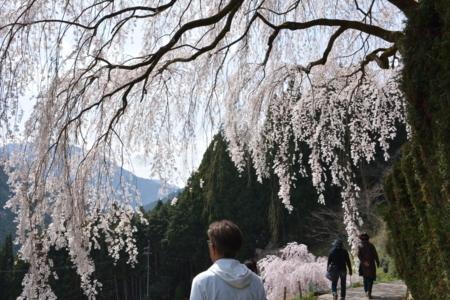 f:id:kurokoshusaru:20180404191503j:image