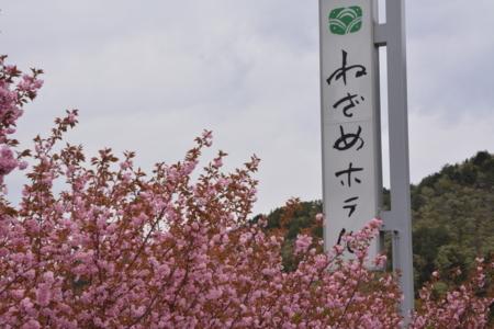 f:id:kurokoshusaru:20180429191819j:image