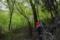 若葉の森へ
