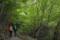 山毛欅の道