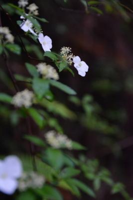 f:id:kurokoshusaru:20180613172317j:image