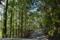 林道の斜陽
