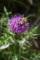 アザミの花粉