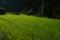 久保の田圃