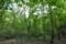 ヌル谷の森
