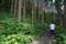 キレンゲショウマ園