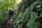 広葉樹林 (2)