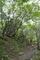 ダケカンバの森