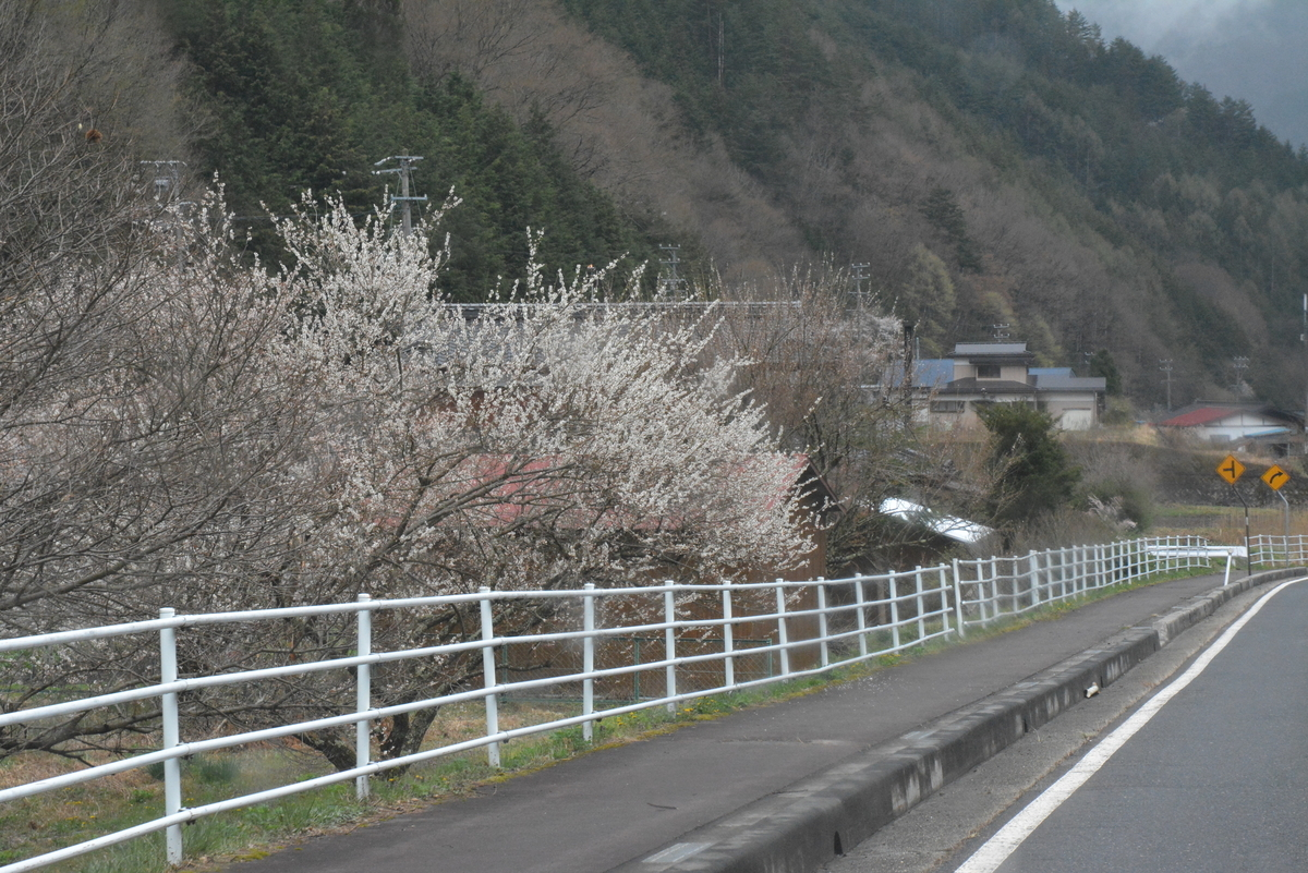 f:id:kurokoshusaru:20190430143637j:plain