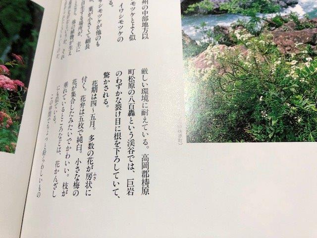 f:id:kurokoshusaru:20190516192017j:plain