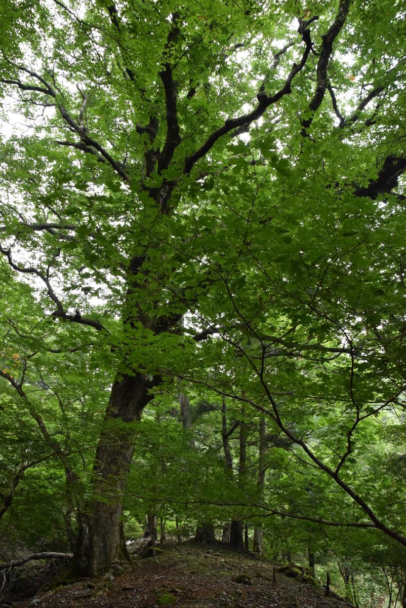 f:id:kurokoshusaru:20190808191917j:plain