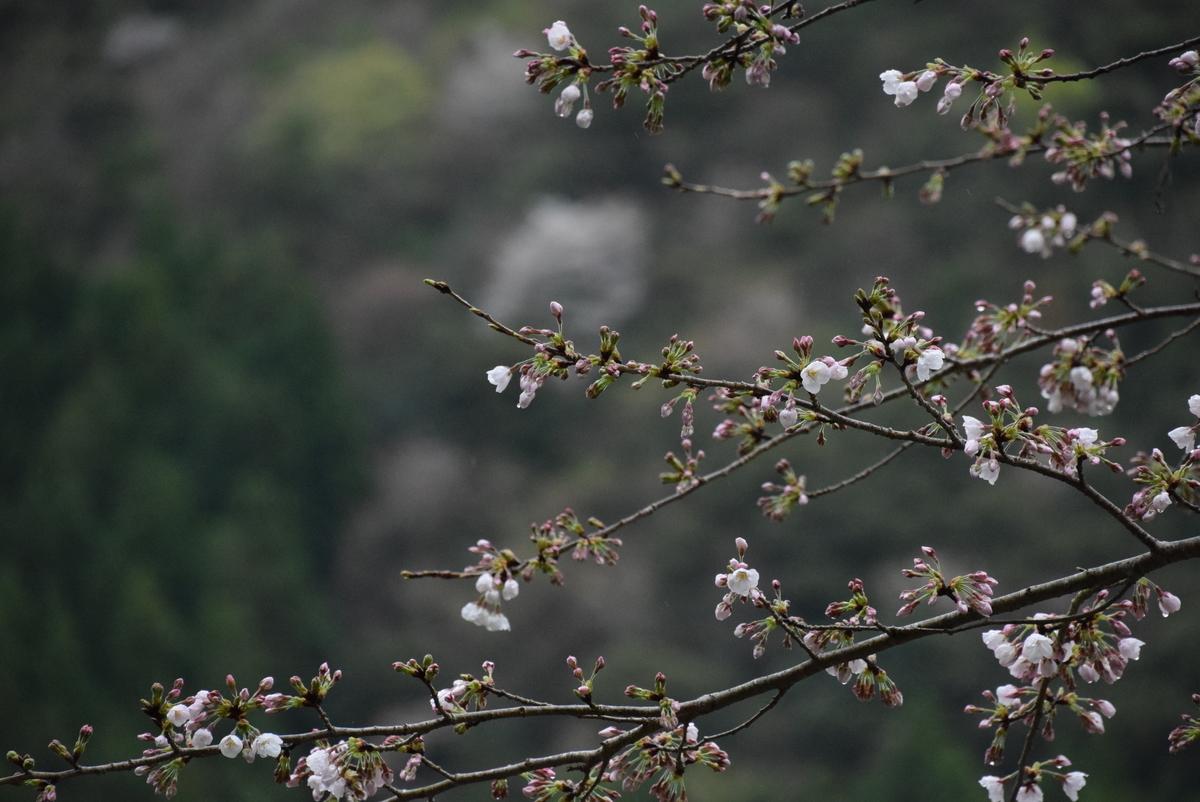f:id:kurokoshusaru:20200402195536j:plain