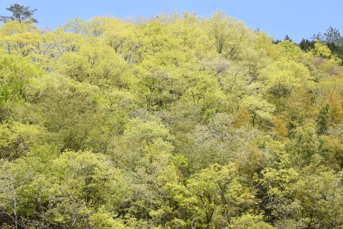 f:id:kurokoshusaru:20200430151354j:plain