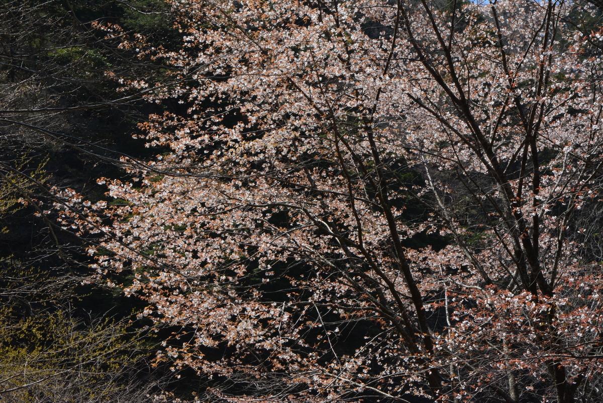 f:id:kurokoshusaru:20200503203849j:plain