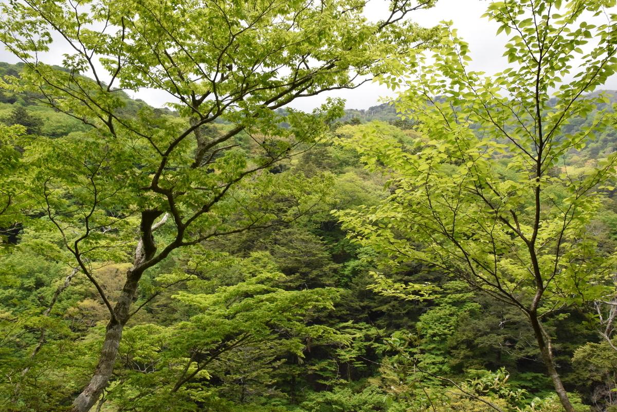 f:id:kurokoshusaru:20200528194236j:plain