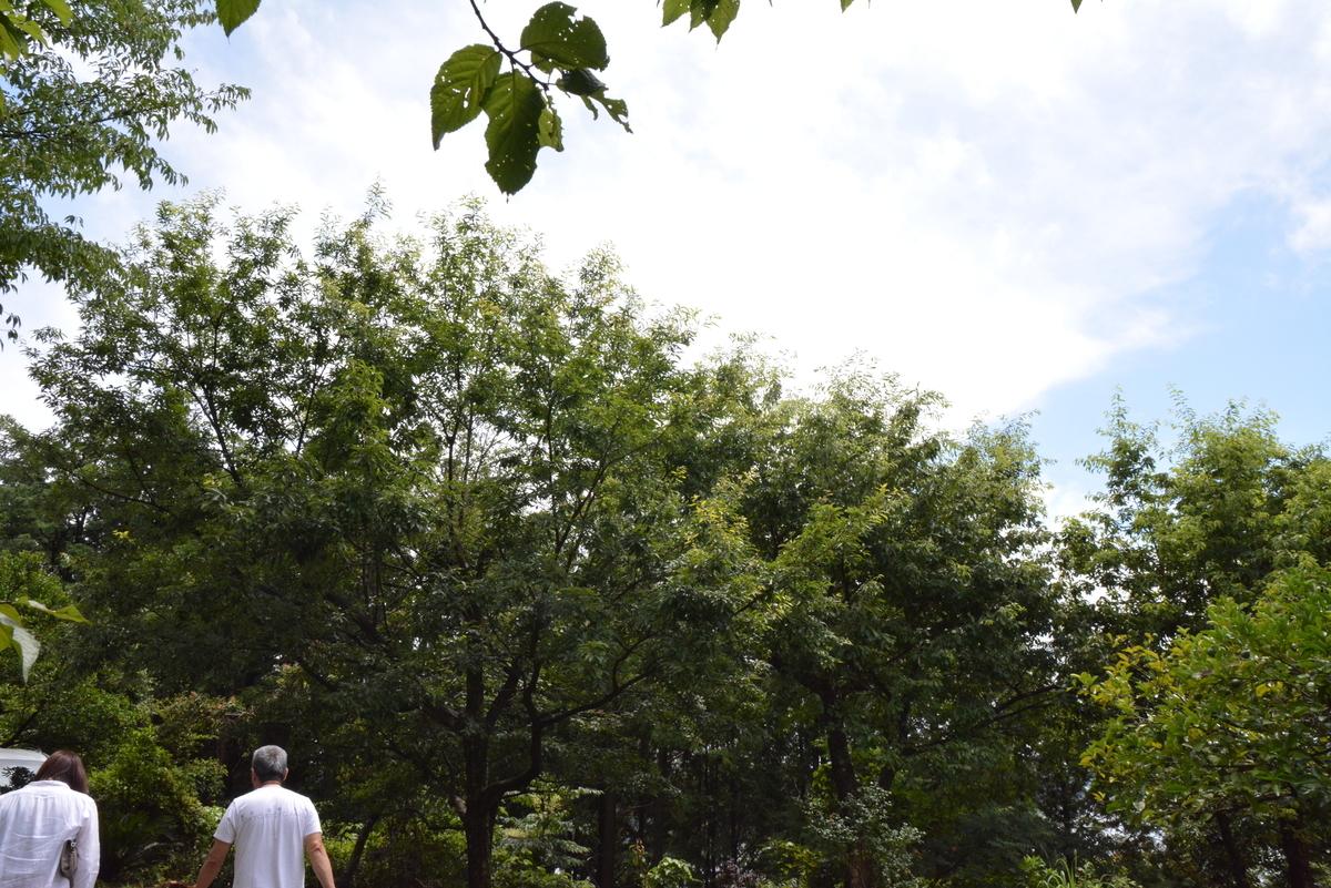 f:id:kurokoshusaru:20200711084620j:plain