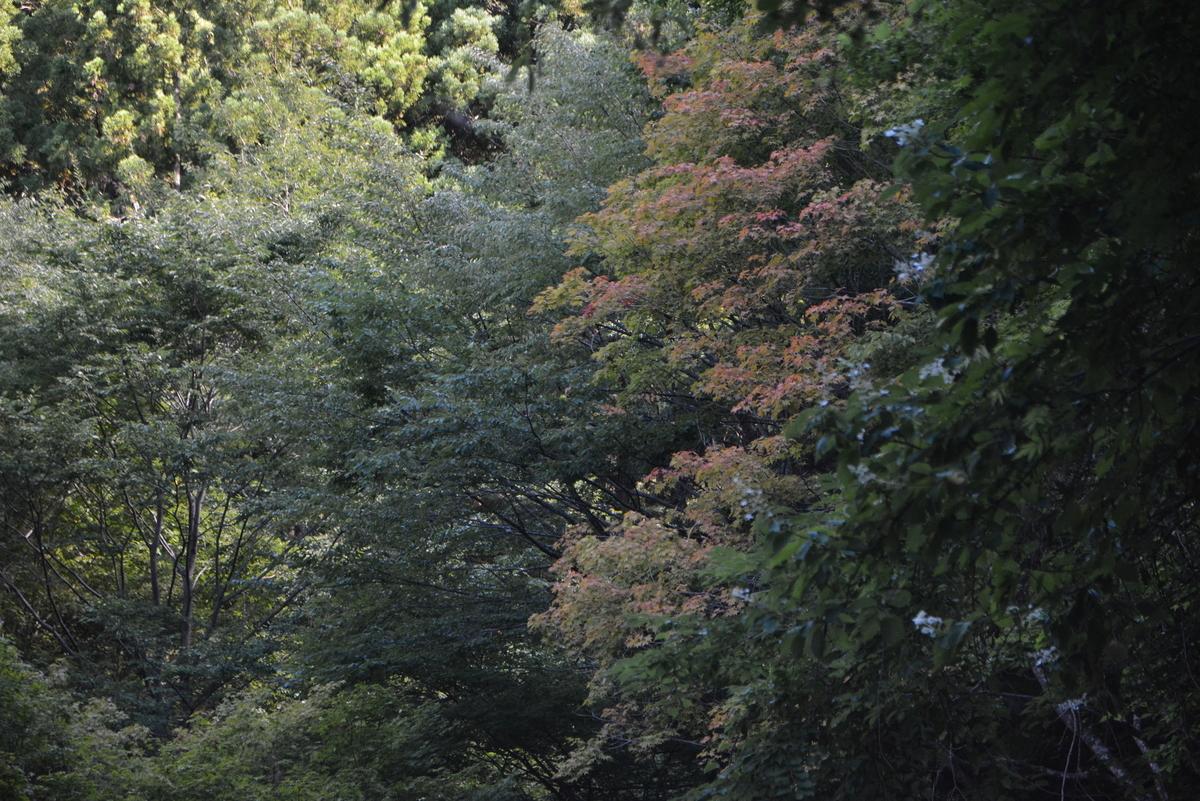 f:id:kurokoshusaru:20200830170523j:plain