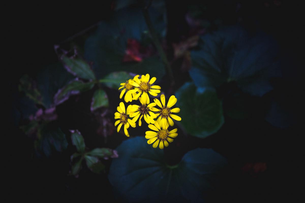 マット調 黄色い花