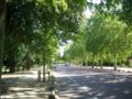 この街路樹はマロニエです