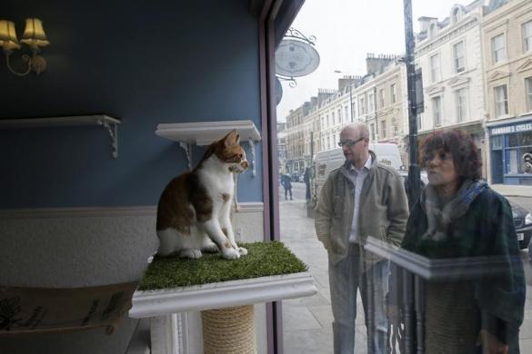 222London's cat cafe