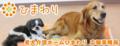 ロゴ 老犬介護ホーム「ひまわり」